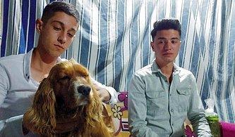 Otomobilin Çarptığı Köpeğini Kalp Masajı ile Hayata Döndürdü!
