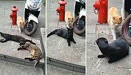 Bildiğiniz Tüm İhanetleri Unutturacak Türden Video: Çapkınlık Peşindeki Kedinin Yakalandığı An!