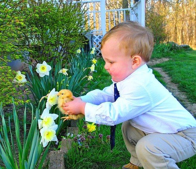 """""""Yeğenim evcil tavuğu Bisküvi'nin çiçek koklamasına yardım ediyor."""""""
