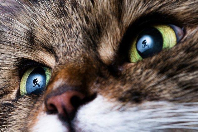 Jaanus Ree imzalı bu büyüleyici fotoğraftaysa bir bisikletçinin kedinin gözlerindeki yansımasını görüyoruz.