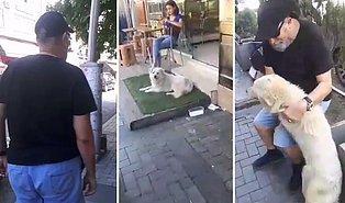 Zonguldak'ta Baktıkları Leo İsimli Köpeği Kaybolduktan Bir Süre Sonra Bartın'da Bulan Ailenin Muhteşem Görüntüleri