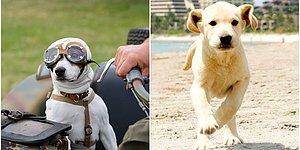 Bilimsel Çalışmalar Sonucunda Sadık Dostlarımız Köpeklerin Yalan Söyleyen İnsanları Tespit Edebildikleri Kanıtlandı