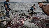 Küçükçekmece Gölü'nde Toplu Balık Ölümleri: 'Hem Su Kalitesi Hem de Biyoçeşitlilik Bitmiş Durumda'