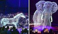 Hayvan İstismarına Teknoloji ile Son Vererek Hayvanlar Yerine 3 Boyutlu Hologram Kullanan Sirk
