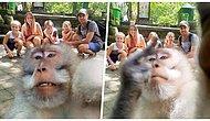 Tatile Gelen Ailenin Kamerasını Kapıp Selfie Sırasında Hareket Çeken Fırlama Maymun