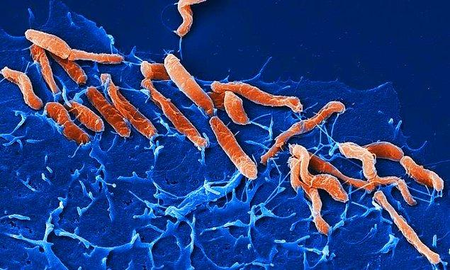 4. Helicobacter pylori