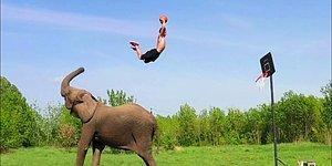 Yetenekli Fillerle Güçlerini Birleştirerek Ortaya Muhteşem Görüntüler Çıkartan YouTuber!