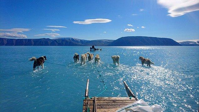 Grönland'ın buz zemini büyüklük bakımından gezegende ikinci sırada yer alır. Bu husky cinsi köpekler Inglefield Bredning haliçini buz üzerinde koşarak geçmeye alışkınlar...