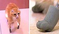 Pati Protezleri Sayesinde Hayata Yeniden Tutunmaya Çalışan Kedi!