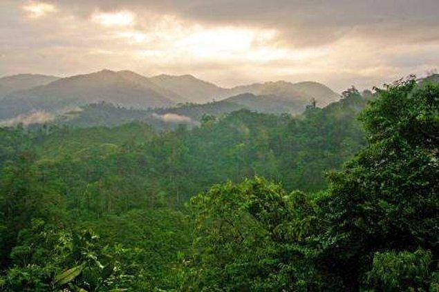 """Bir grup araştırmacı, Honduras yağmur ormanlarının derinlerinde yer alan """"Kayıp Şehir""""de nadir bulunan, nesli tükenmekte olan ve neslinin tükendiği düşünülen türlerle dolu bir ekosistem keşfetti."""