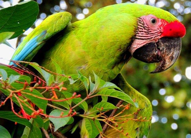 RAP ayrıca Honduras'ta daha önce hiç kayda geçmemiş 22 türü de keşfetti.
