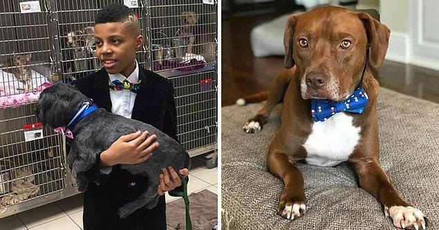 13. 12 yaşındaki bu çocuk, köpeklerin fotoğraflarda daha iyi görünmelerini sağlamak için onlara papyonlar bağlıyor, böylece insanlar onları daha hızlı sahipleniyor.