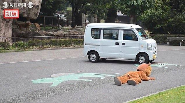 Hayvan bakıcılarından bir tanesi kostümlü adamı vurduğunda, aslanımız gerçekten vurulmuş gibi yere yığılıyor.