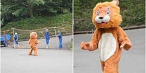 Aslanların Kaçma İhtimaline Karşı Çalışanlarından Birine Kostüm Giydirerek Tatbikat Yapan Hayvanat Bahçesi