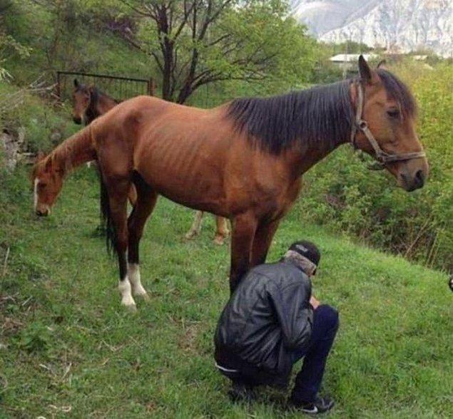 14. Bu atın tek bir kafası var.
