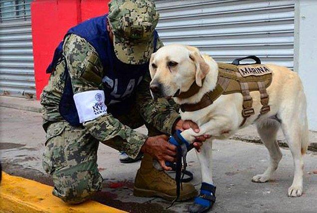 Frida, Meksika, Haiti, Guetemala ve Ekvador'daki 53 kurtarma operasyonunda görev aldı.