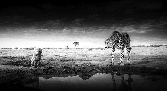 1. Bir leopar ve yavrusunun yakın plan fotoğrafı