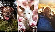 Sadık Dostlarımızın Fotoğraflarının Ödüllendirildiği 2019 Köpek Fotoğrafçıları Yarışmasının Kazananları Açıklandı