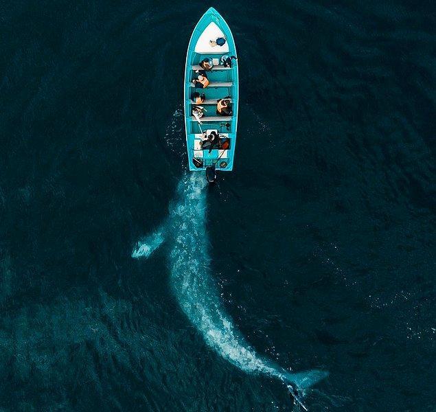 3. Turistlerle dolu bir botu iten gri balina.