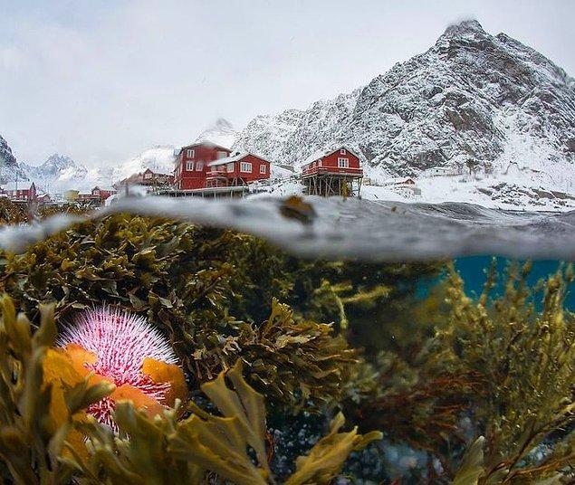 9. Lofoten, Norveç'in kışın su altından görünümü.