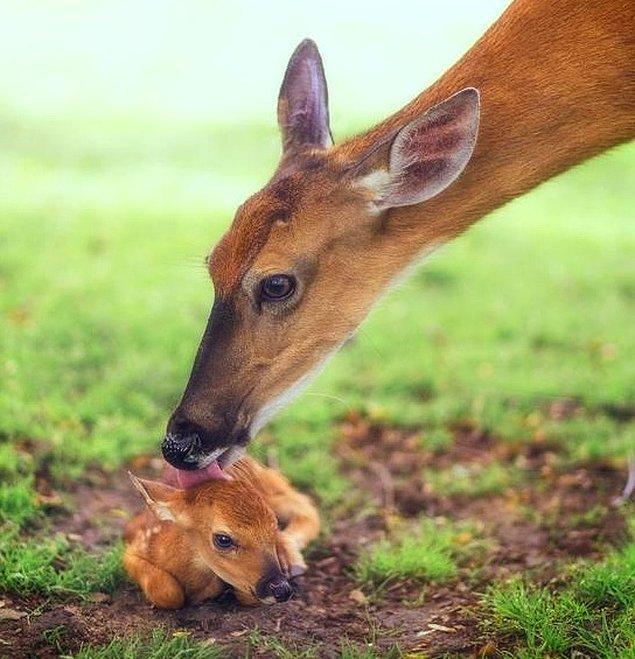 21. Gerçek Bambi.
