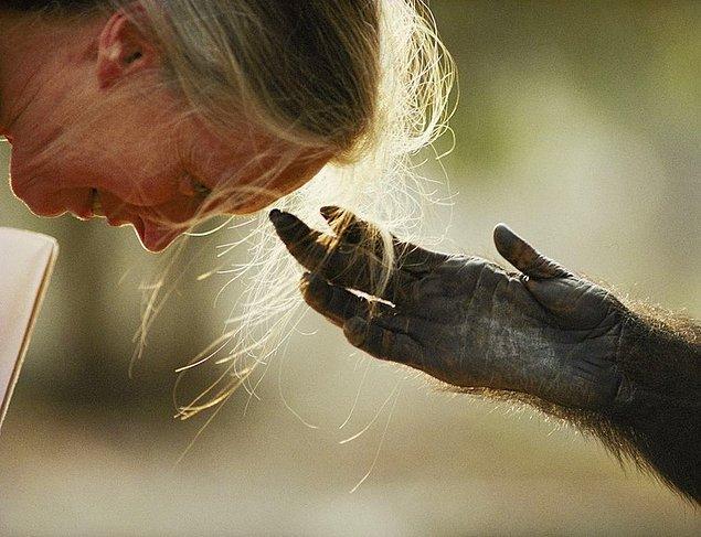 25. Bir kadın ve bir şempanze arasında tatlı bir an.
