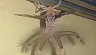 Evinin Tavanında 'Uzaylıya Benzeyen' Yaratığı Görünce Hayatının Şokunu Yaşayan Adam