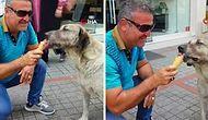 Aşırı Sıcaklardan Bunalan Köpek Dondurma Yedi