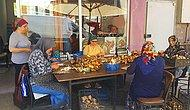 Günde 7 Bin TL Kazanan Var: Sinop'tan Dünyaya Mantar İhraç Ediyorlar