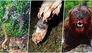 Doğanın Ne Kadar Vahşi Olabileceğine Tanıklık Edebileceğiniz Birbirinden İlginç Görüntüler