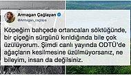 'Kesmeyin Hocam!' ODTÜ'de Yaşanan Ağaç Kesimiyle İlgili İnsanlar Tepkilerini Adeta Haykırıyor