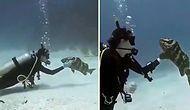 Dalgıca Kendini Sevdiren Balığın Muhteşem Görüntüleri