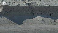 Avrupa'ya Göç Eden Kırlangıçlar Kum Tepelerine Yuva Yapınca, Ayda 100 Bin TL Zararı Göze Alarak Çalışmayı Durduran Şirket