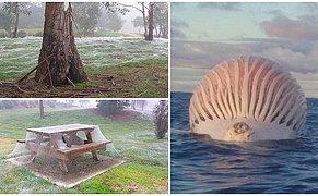 Avustralya'nın Aslında Bir Masal Ülkesi Olmadığını Gösteren Birbirinden İlginç Görüntüler