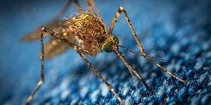 Sivrisineklere Dikkat: 'Batı Nil Ateşli Virüsü' İstanbul'da İlk Kez Görüldü