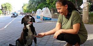 Emekli Maaşı İle 18 Köpeği Besliyor: 'Onların da Sevilmeye İhtiyacı Var'