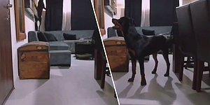 İnsan Dostu Evden Çıktıktan Sonra Dostunun Yolunu Gözleyen Köpek