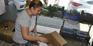 Adana'da İnsanlık Dışı Olay: Hamile Kediyi Pitbull'a Parçalatıp İzlediler