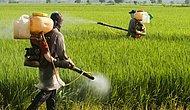 İnsan Sağlığını Tehdit Eden Pestisit Nedir?
