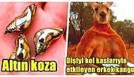 Hayvanlar Alemine Dair Belgesel Çılgınlarının Bile Hiçbir Yerde Duymadığı Gerçekler!