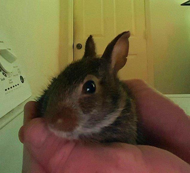 """3. """"Bu minik tavşan, aptal kedimin elinden kurtuldu. Şimdi stabil durumda ve serbest bırakılmaya hazır."""""""