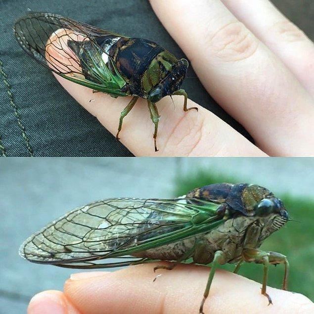 """21. """"Küçük ama sesli. Arkadaşım ağustosböceği."""""""