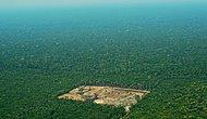 Amazon'da Tahribat Artıyor: Bin Kilometrekareden Fazla Ormanlık Alan Tahrip Edildi