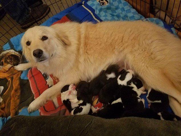1. Facebook sayesinde kendisine yavru bulunan köpek: