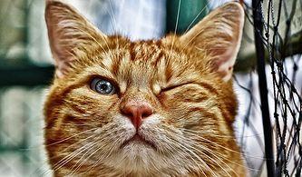 Bize Kedini Anlat, Sana Taktığı İsmi Söyleyelim!