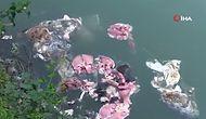 Artvin'deki Muratlı Barajı'nda Korkunç Görüntü: Çok Sayıda Hayvanın Sakatat ve Derileri Göle Atıldı