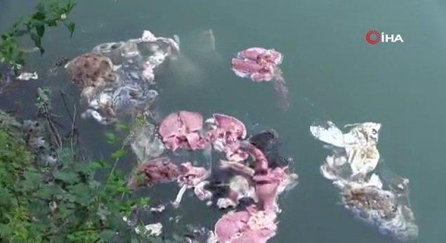 Muratlı Baraj gölü üzerinde çevre köylerinden geldiği tahmin edilen kurban atıkları ve çöpler çevrede kötü kokuya neden oldu.