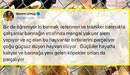 Hayvanların Zehirlendiği, Dövüştürüldüğü ve Ölüme Terk Edildiği İddia Edilen Diyarbakır'daki Barınakta Yaşananlara İnanamayacaksınız!