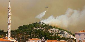 HAYTAP, İzmir'de Çıkan Orman Yangınlarında Yaralanan Hayvanların Tedavisini Üstlendi