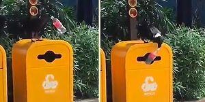 Kuş Yapabiliyorsa Siz de Yapabilirsiniz: Pet Şişeyi Çöpe Bırakan Kuştan İnsanları Utandıracak Hareket!